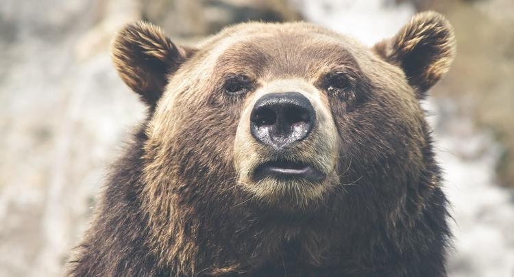 4th Consecutive Day of Market Cap's Bearish Behavior