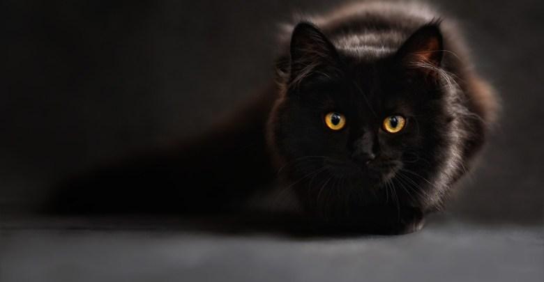 Crypto Kitties over Cats Anyday