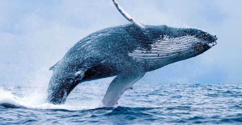 Crypto Whale Attracts Wild Speculations