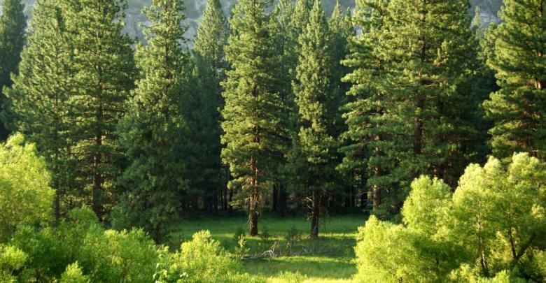 Worldwide Tree Plantation Initiative also Hits Blockchain