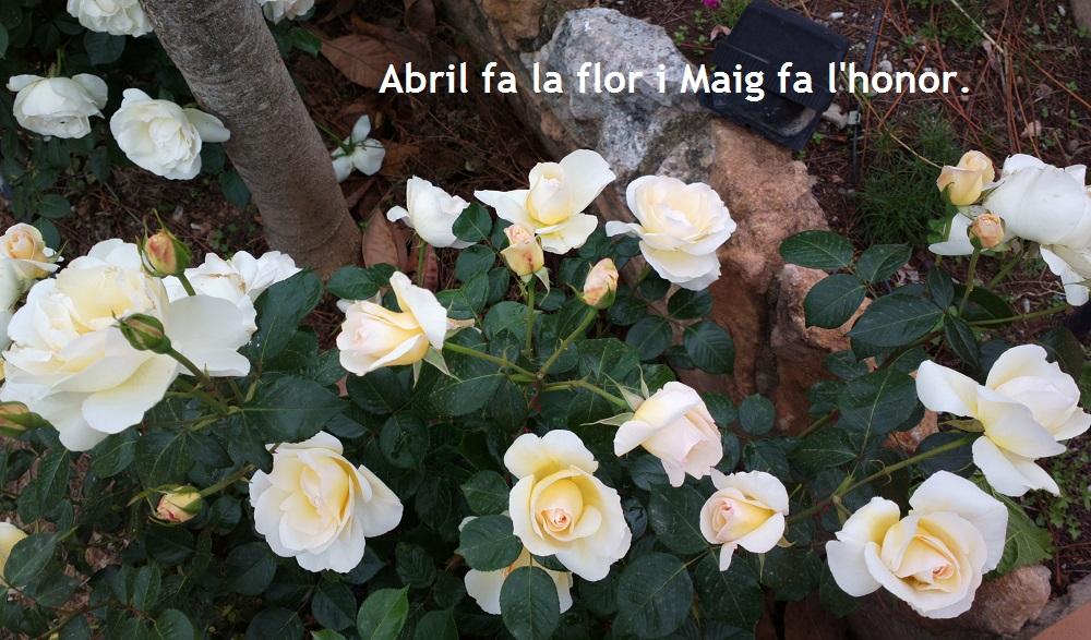 """""""L'Abril diu al Maig..."""" (meteorresum d'Abril del 2014)"""