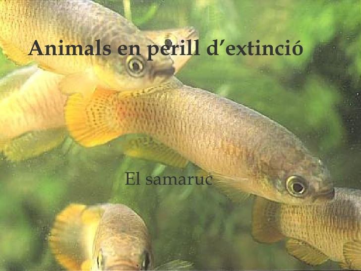 La sisena extinció de les espècies