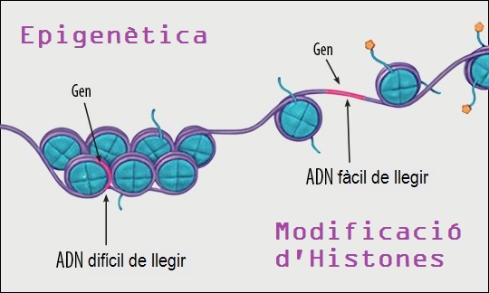 """""""Fragments escollits"""": Epigenètica, la 'gramàtica' del genoma."""