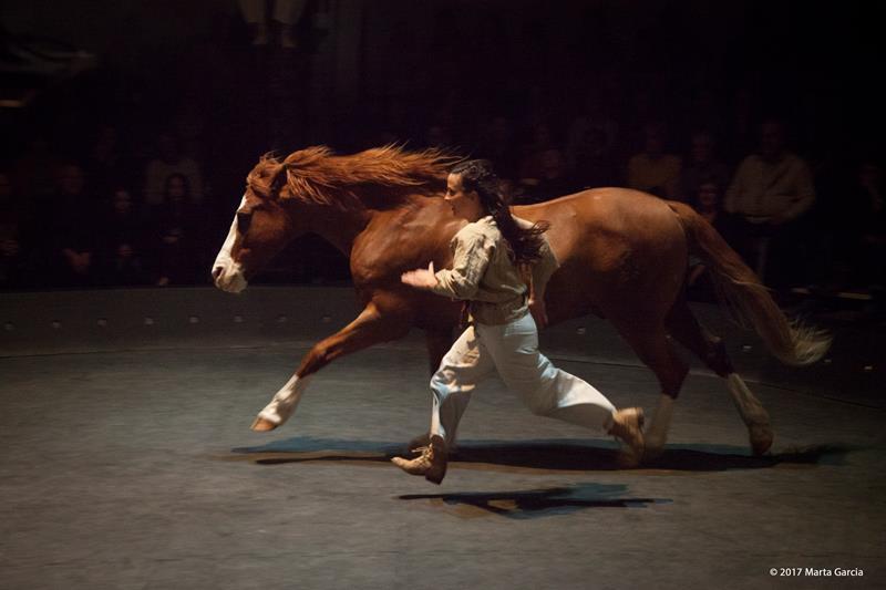 Mor el cavall Bonito, protagonista dels espectacles de Baró d'Evel Cirk