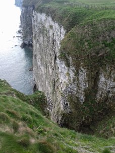 Bempton Cliffs April 2017
