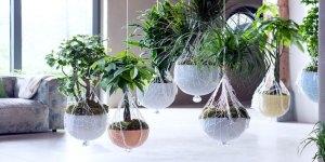 luchtzuiverende planten, wat zijn dat
