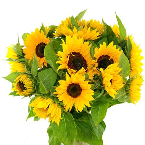 Zonnebloemen bestellen of bezorgen online