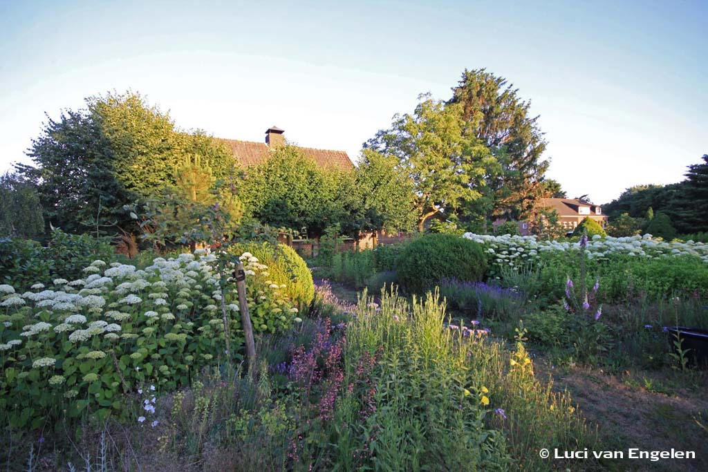 vogelrijke tuin