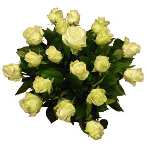 rozen-wit