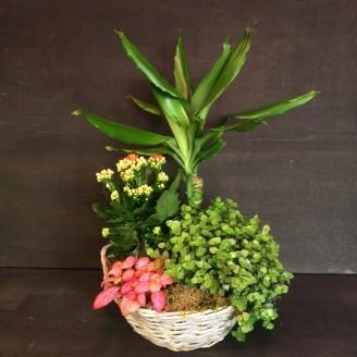 Planten en plantenbakjes