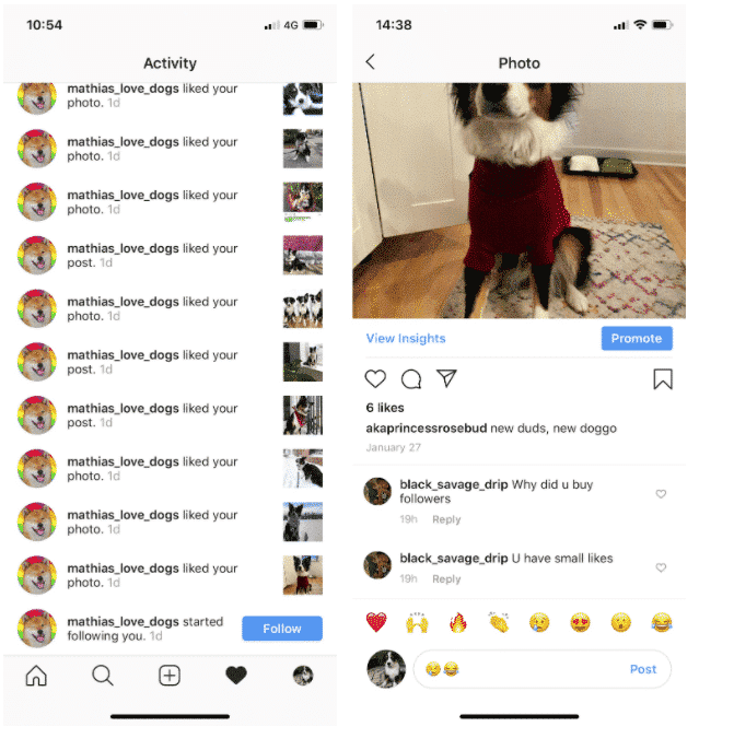 Instagram image of author's dog with only 6 likes