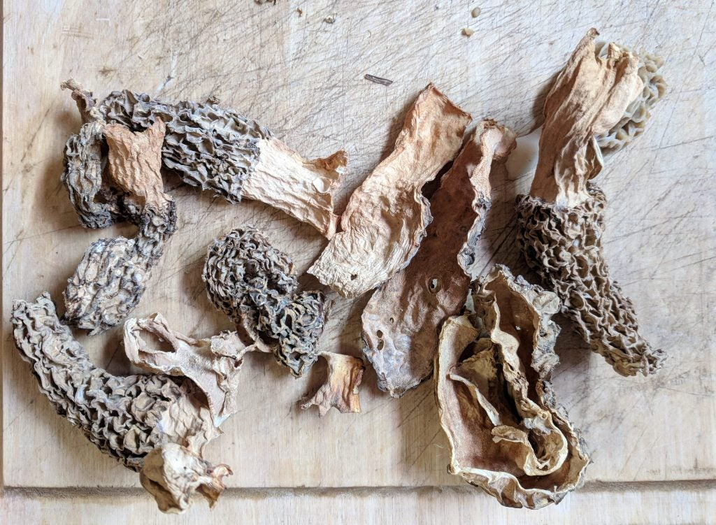 foraged mushrooms