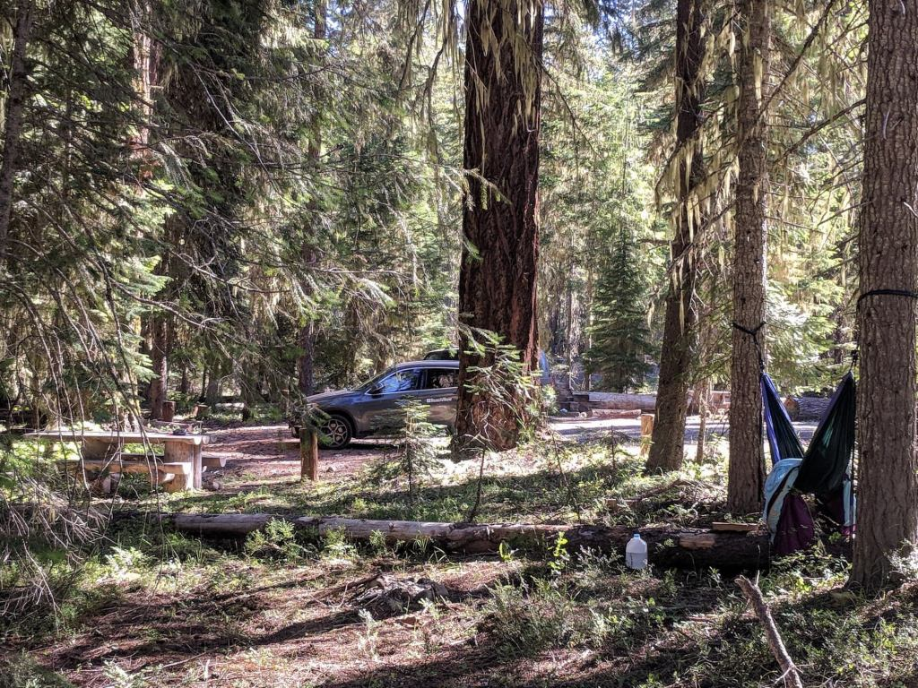 thielson forest camp