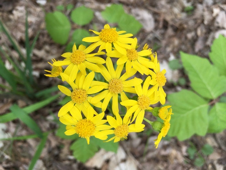flowers in holson valley oklahoma on a leave no trace camping trip