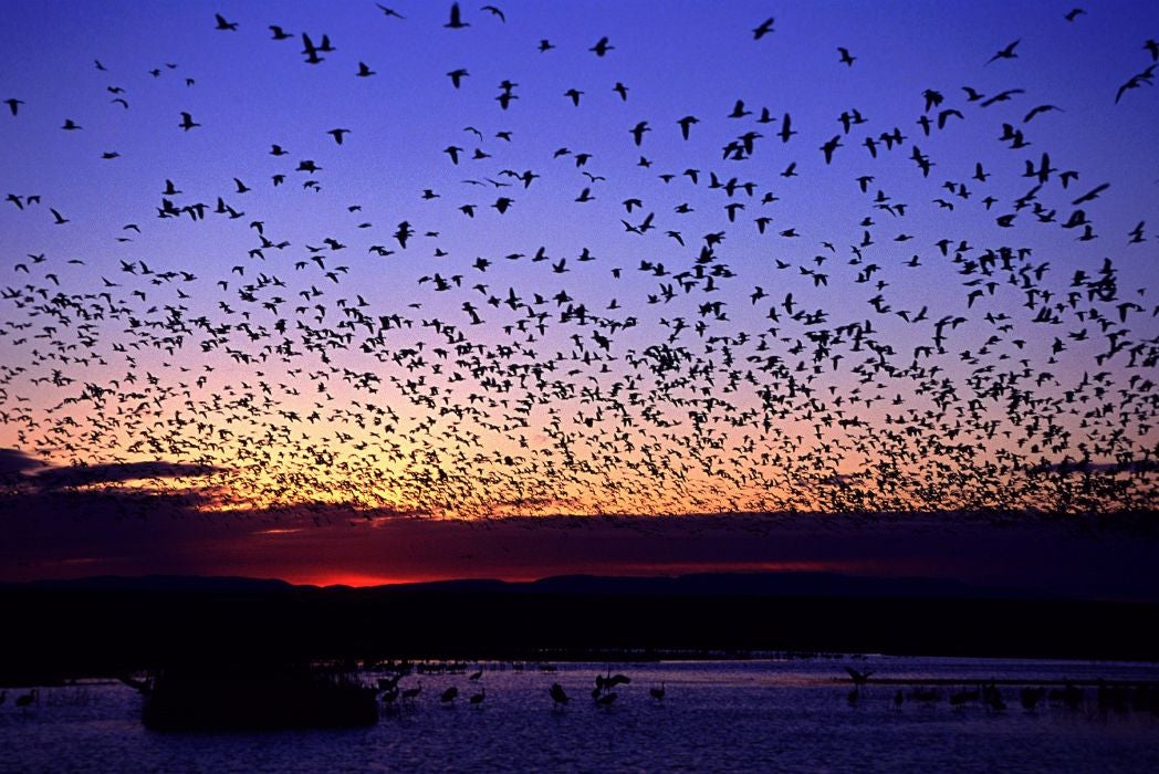 go birding at sunrise to see large flocks of birds