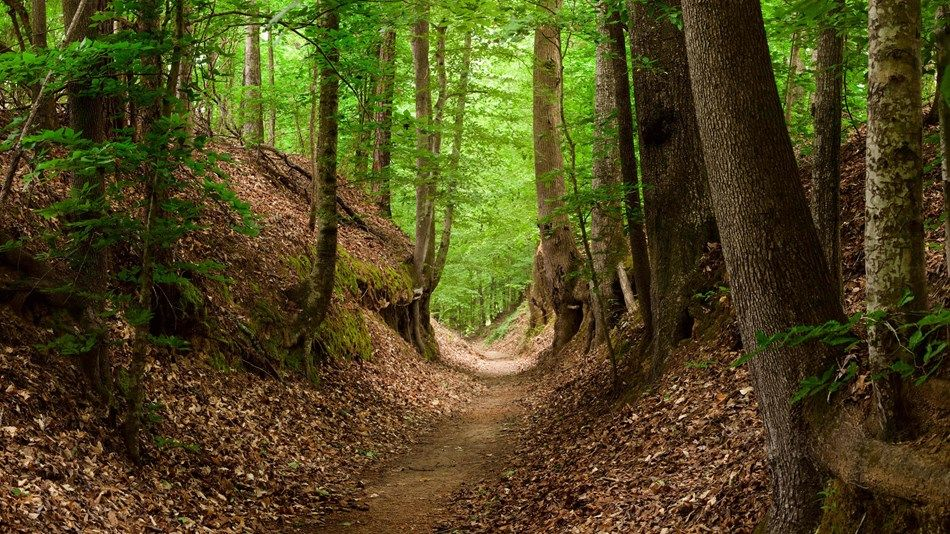 The Natchez Trace Trail weaves through the forest