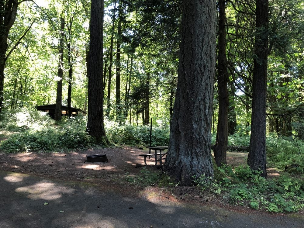 empty wooded campsite featuring fire ring and picnic table at chena wayside campground