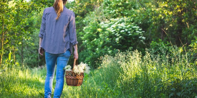Woman in blue shirt walking in tall grass, collecting healing herbs