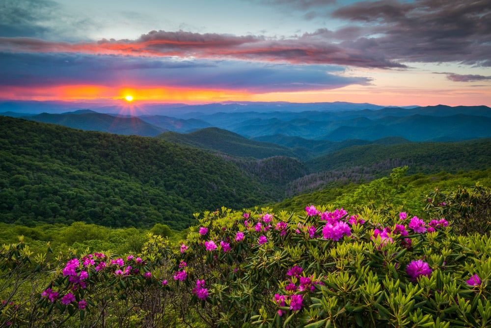 Blue Ridge Mountains at sunset with purple wildflowers in foreground