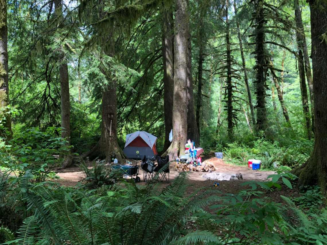 A grey and orange tent, a pile of firewood, and coolers in a clearing below pine trees in the middle of the forest.