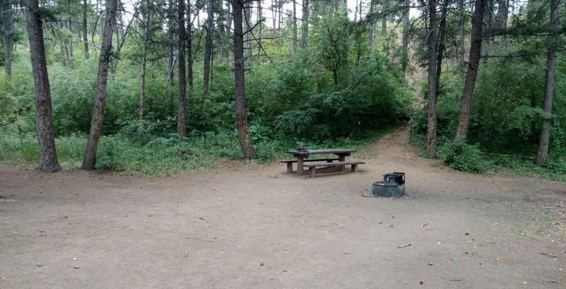 Campsite with fire pit and picnic table and a few trees.