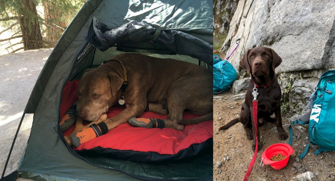 Here's the Dog Hiking Gear You Need to Take Your Pet Backpacking