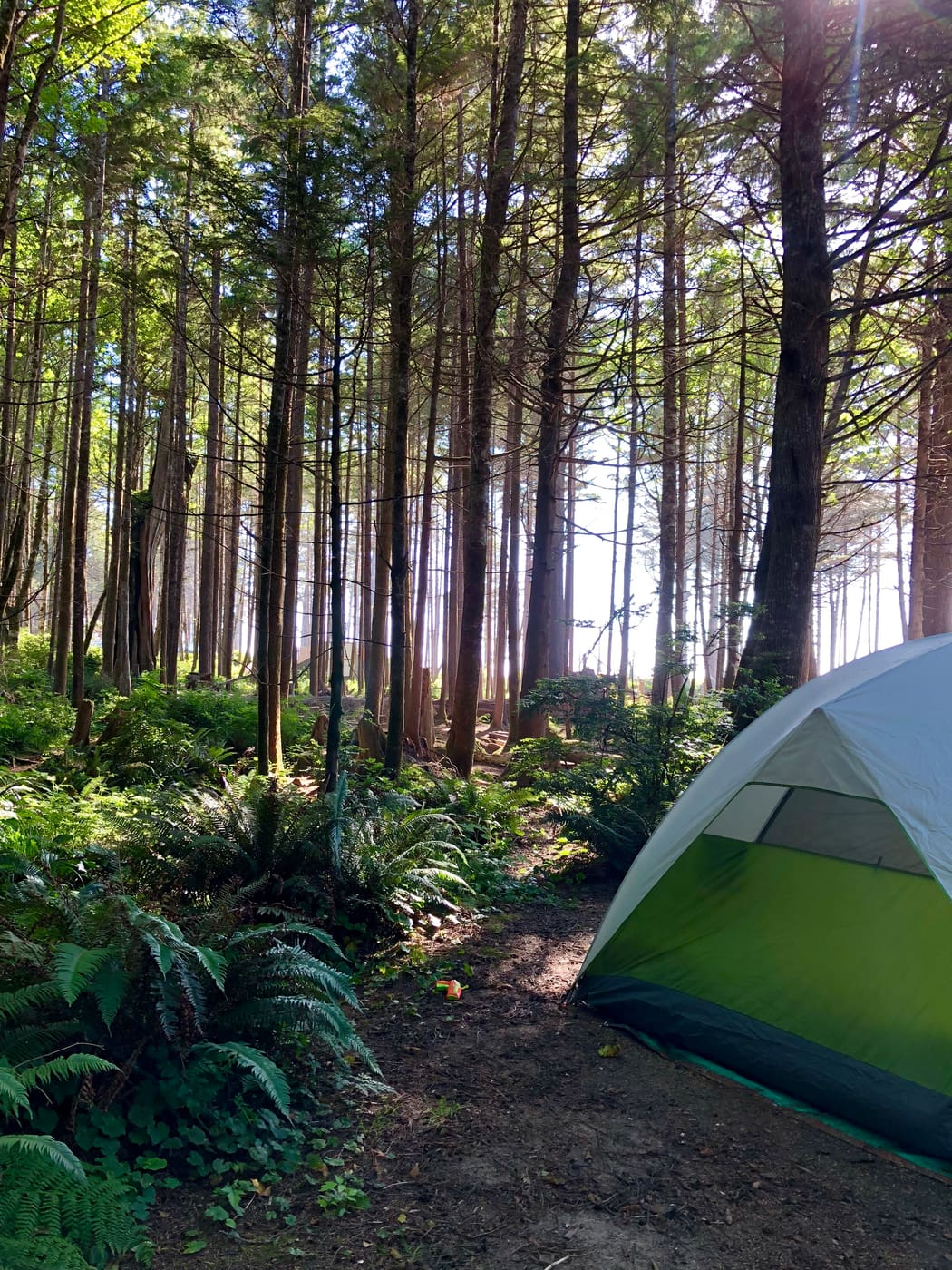 Green tent set up in a coastal forest.