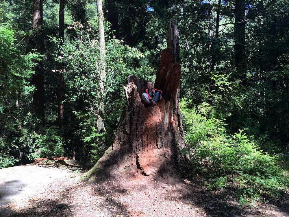 Child sitting in redwood tree stump