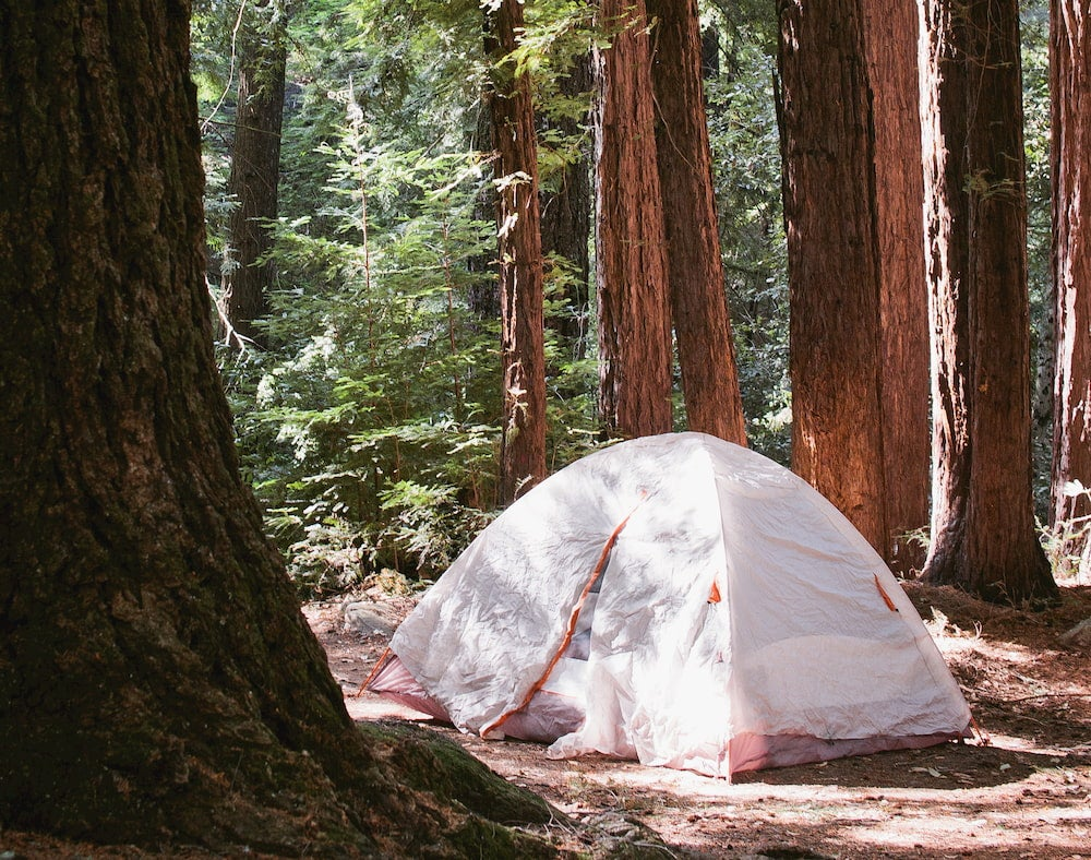 a tent is set up in a redwood forest, with a white rain fly overtop.