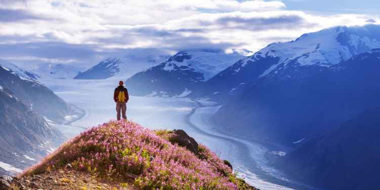 hiker standing on flower covered peak overlooking glacier field in Wrangell St Elias national park