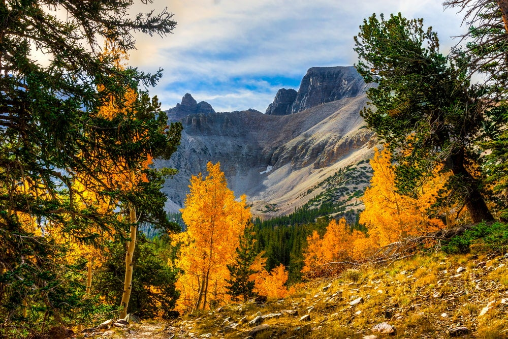 View of colorful aspens and mountains in background in Great Basin National Park