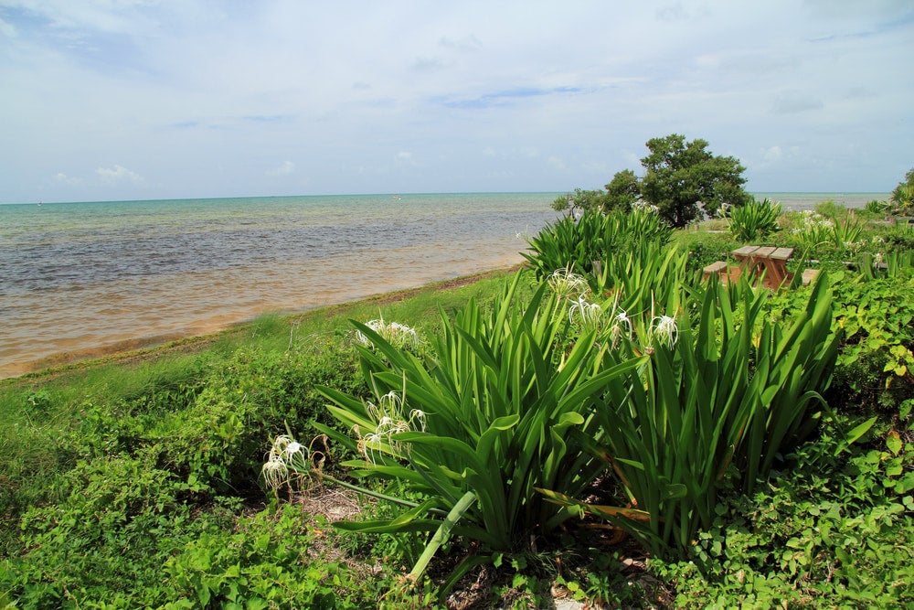 a green shoreline in long key state park florida