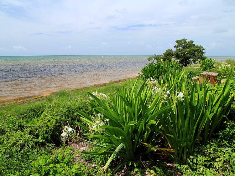 coastal views at long key state park florida