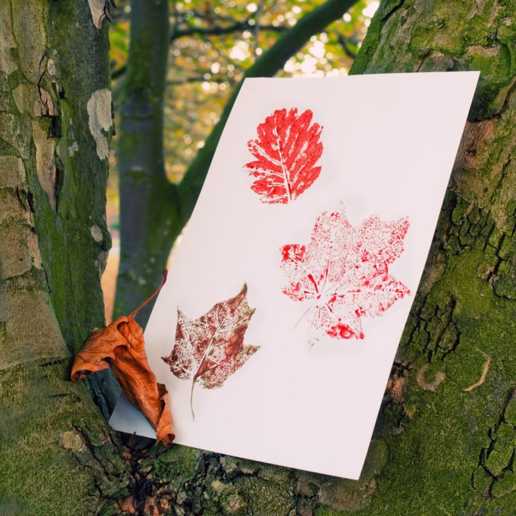 three leaf rubbings on a paper in the forest