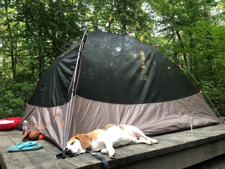 beagle sleeps on wooden tent pad near tent in George Washington Rec Area in Rhose Island, photo from a camper on The Dyrt