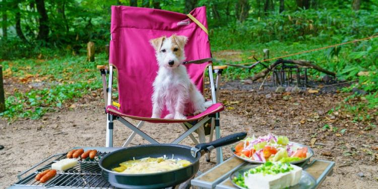 a dog sitting on a camping chair tied to a zip line