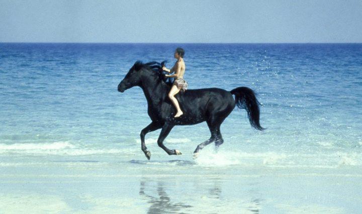 Der schwarze Hengst (1979) – Filmkritik