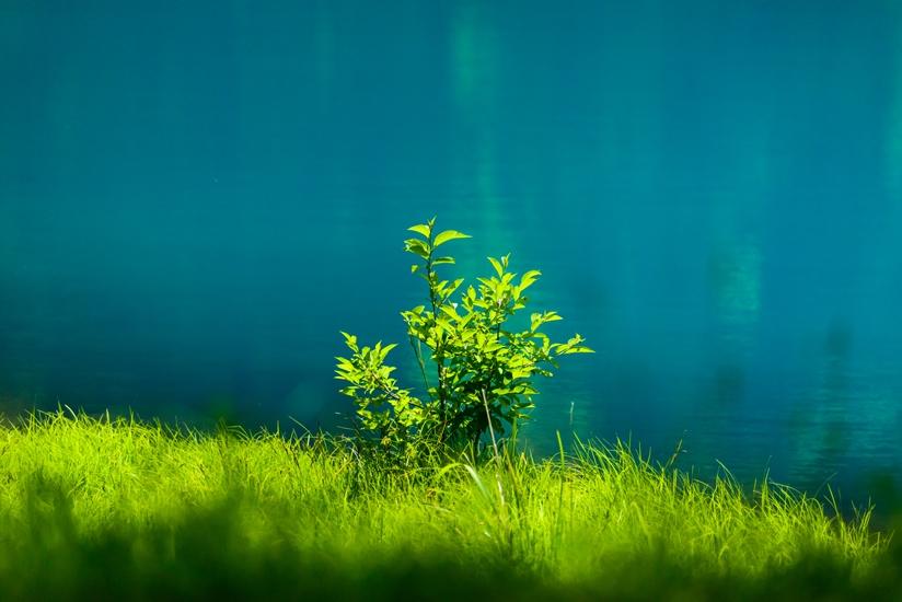 蓼科青い池?