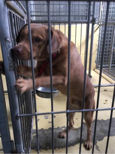 宮崎県収容犬17-11-22-003