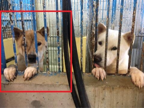 宮崎県収容犬17-11-22-008