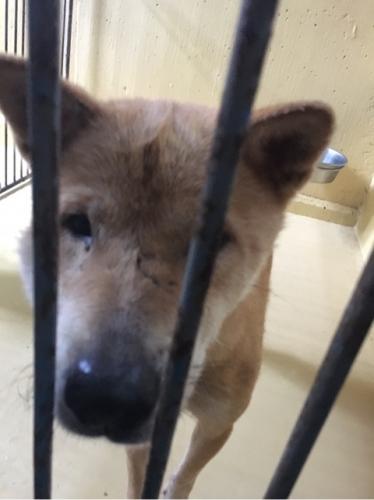 宮崎県収容犬17-11-22-010