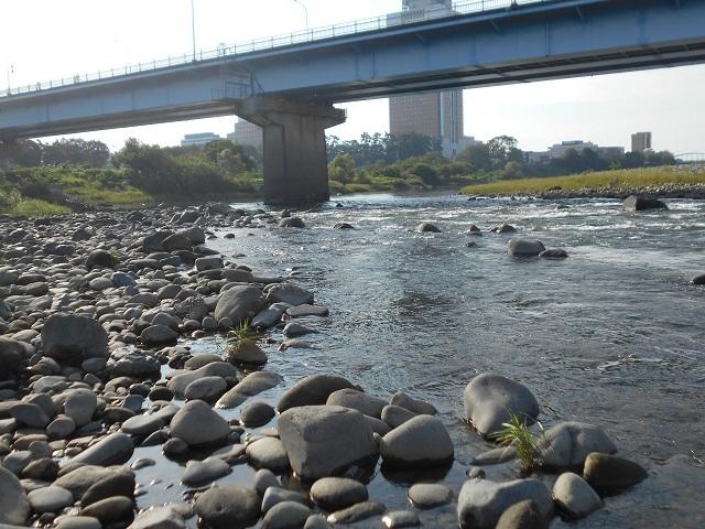 20180913中央大橋橋脚DSCN5028.jpg