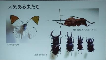 2人気ある虫たち