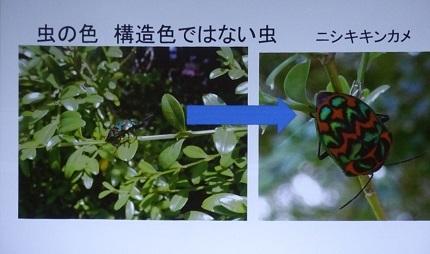 12虫の色・構造色
