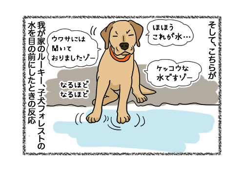 04022019_dog3.jpg