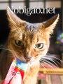 里親さんブログ.日曜日のうまうま顔猫。No.291