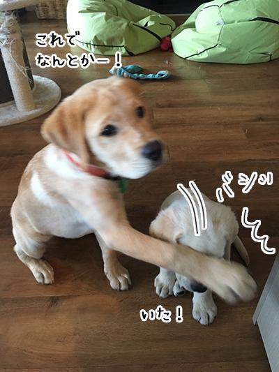 21022019_dog3.jpg