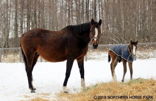 【競馬】キタサンブラックとスイープトウショウの子供デカすぎワロタwww