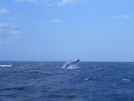 whale687687.jpg