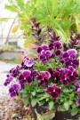 .春めいてきた庭とサビ猫ロック!